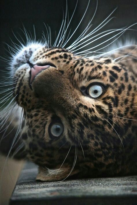 Fantástico Naturezalinda Animais Selvagens Animais