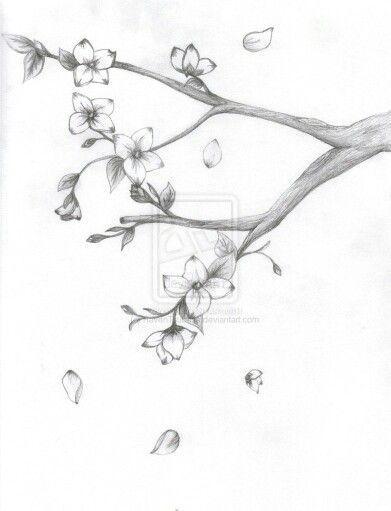 Sakura Cherry Blossom Drawing Tree Drawings Pencil Japanese Blossom
