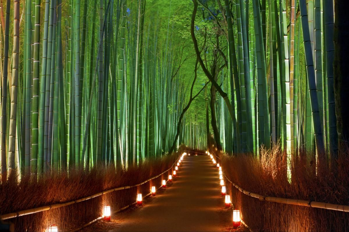 Arashiyama bamboo forest. - The Most Unique and Mysterious Forests in the World