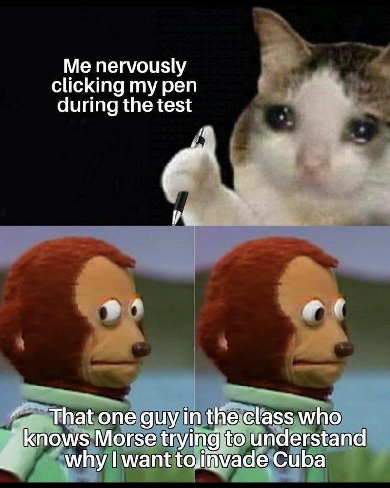 46 Dumb Cat Memes For The Feline Fiends