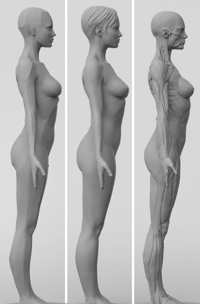 3dtotal Anatomy: 3 piece set of female figures | Pinterest | ZBrush ...