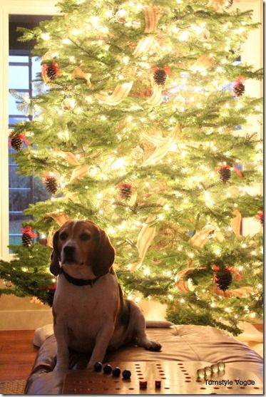A glowing tree and a happy beagle.