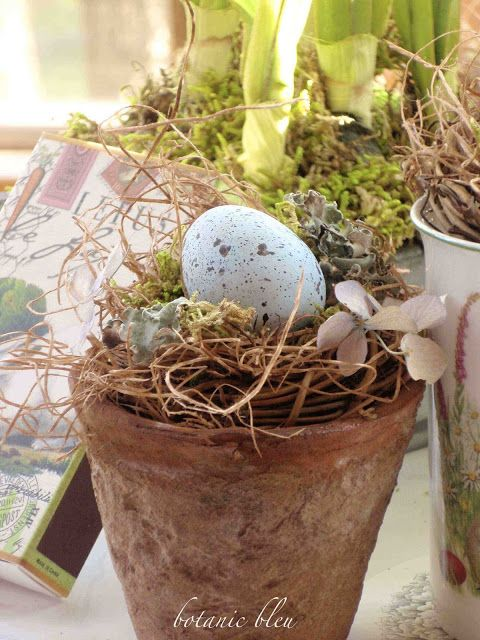 11 Five Ways to Use Birds, Eggs, & Nests in Spring