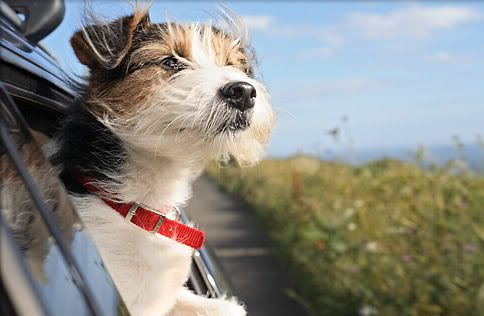 10 Summer Travel Feels Like Happiness As Happy And Free As A Dog Watching The Scenery And Smelling The Air Out A Car Window Tr Pet Travel Dog Car Dog Travel