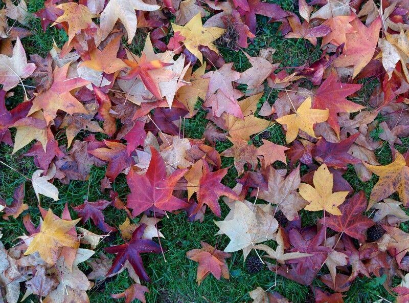 I #colori dell'#autunno