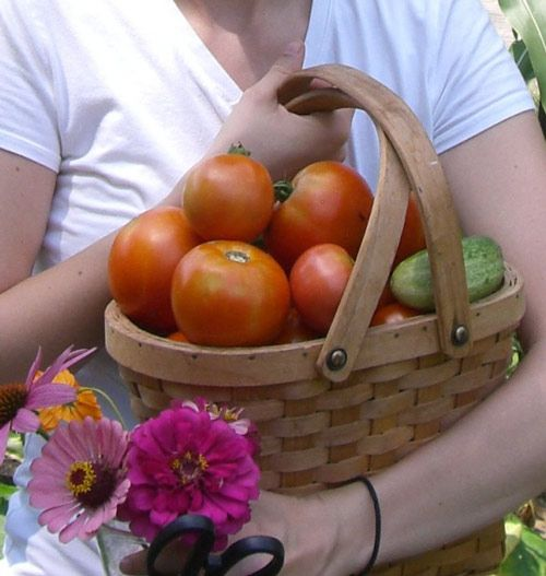How To Grow Tomatoes In The Deep South