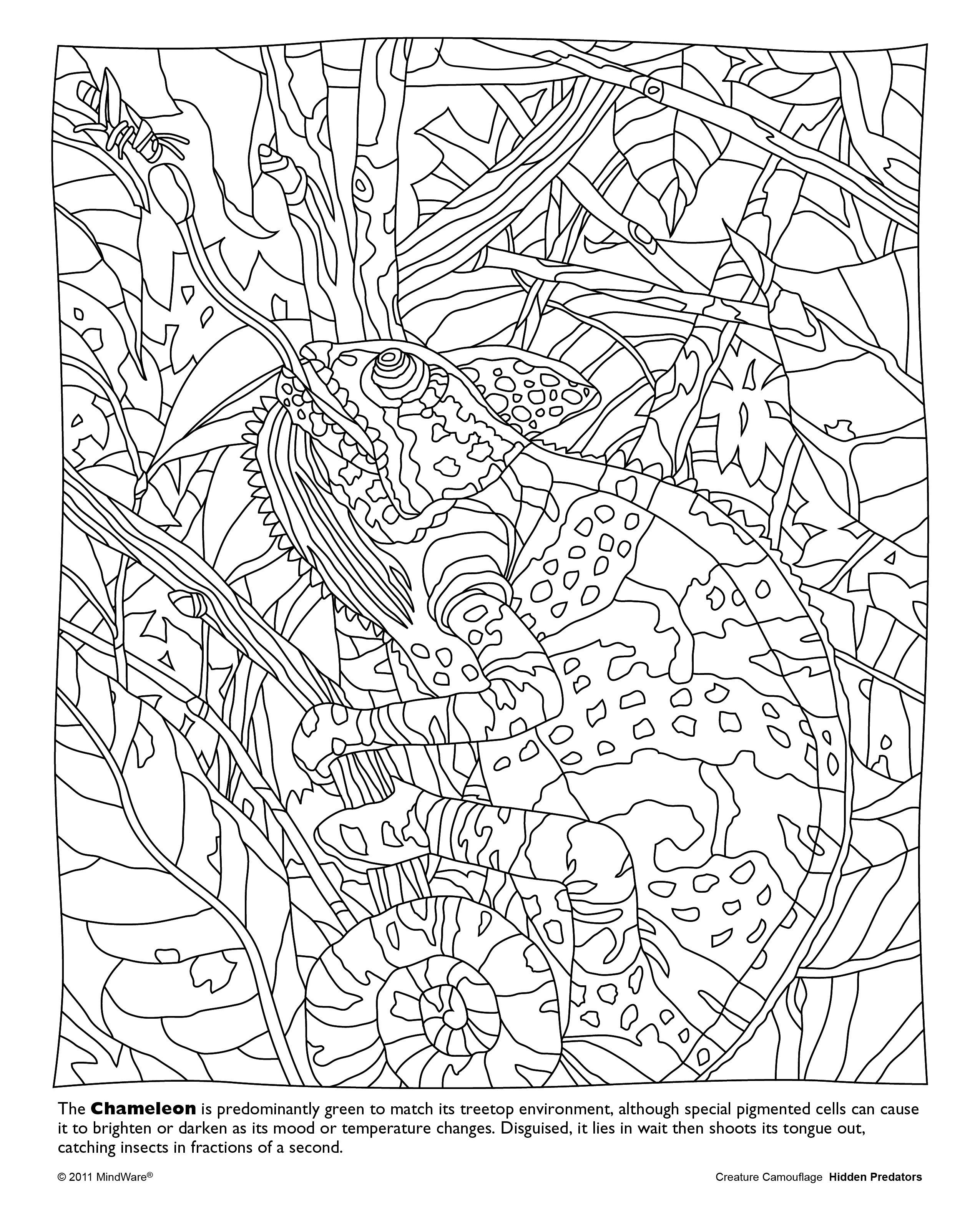 Coloring Pages Of Camouflage Animals Copy Hidden Predators