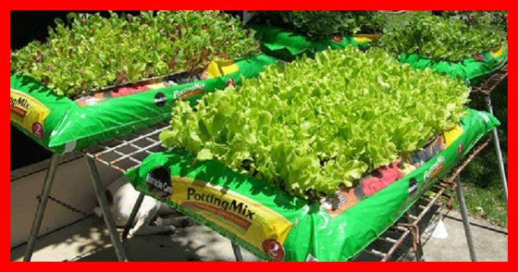 E aí, já pensou em ter sua própria horta em casa? As vantagens são grandes: oferta de alimentos naturais, saudáveis, longe de pesticidas e a economia, que é inquestionável. Não pense que a falta de espaço é um grande problema, pois não é.