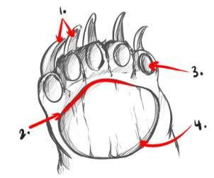 How To Draw Bears Step-By-Step: STEP 5. The paw of a bear is something very  important to study. They have five fingers, aligning side by side.