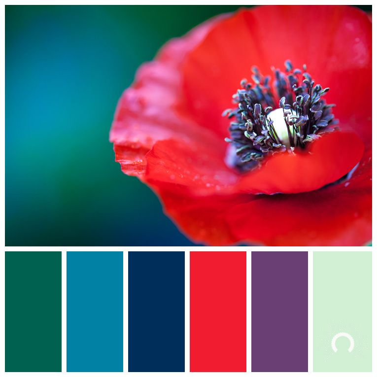 Color inspiration   red poppy   - warm cool color harmony ...