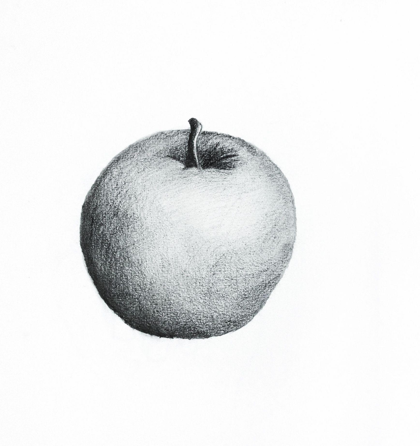 Apple pencil sketch by liron simon