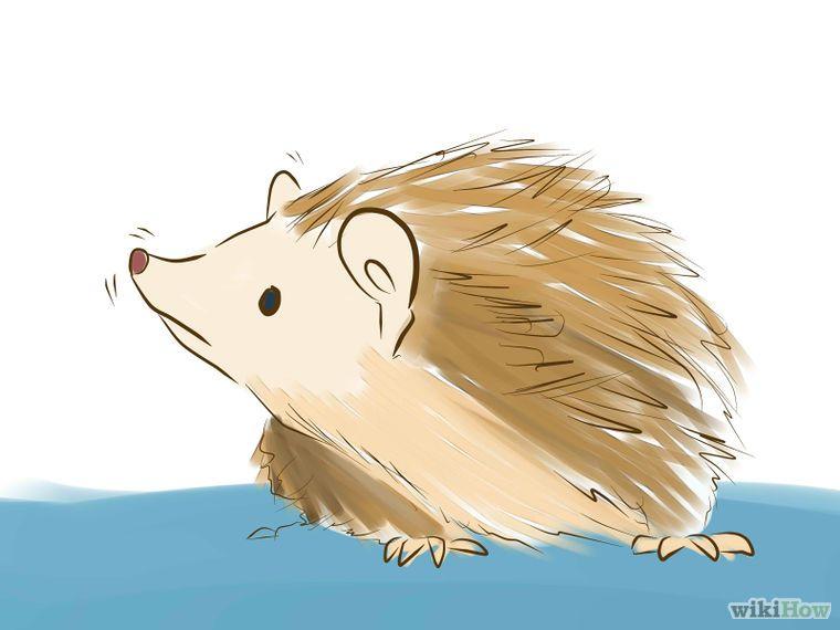 How to take care of a hedgehog hedgehog animal hedgehog