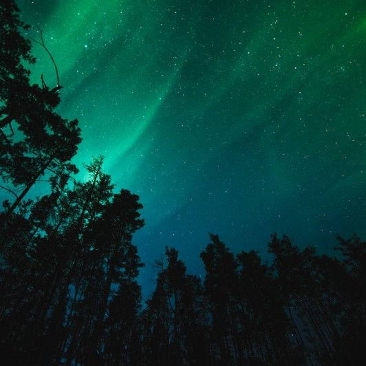 Night Forest Landscapes By Mensent Con Imagenes