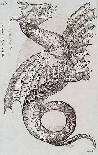 From the Book by Ulyssis Aldrovandi - Historiae Serpentum et Draconum. Bonon - Marcus Antonius Bernia, 1640, page 420  Via