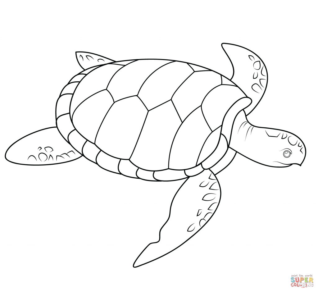 photo about Turtle Pattern Printable named Sea Turtle Habit Coloring Web page  Drawing Turtle
