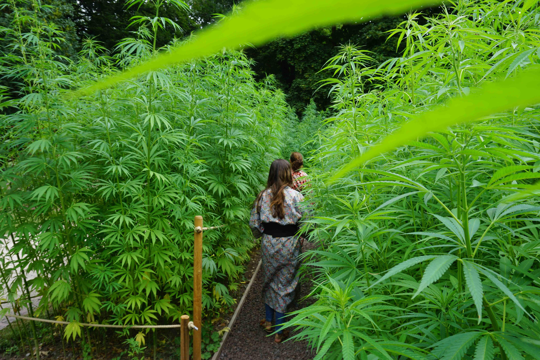 Chanvre Jardin Japon Alsace Vosges Parc De Wesserling With