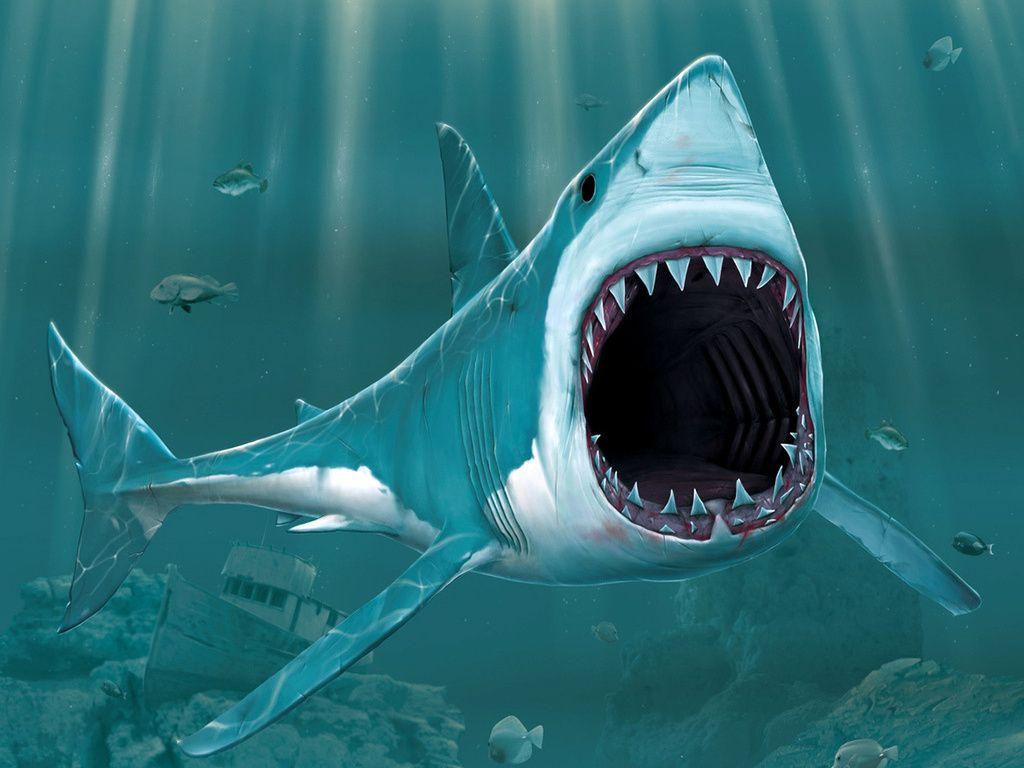 3d Digital Art Gallery 3d Shark Wallpaper 3d And Digital Art Photo Gallery Big Shark Shark Images Shark Pictures