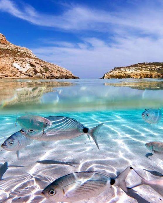 Els amants de la mar  - comunitat - Google+