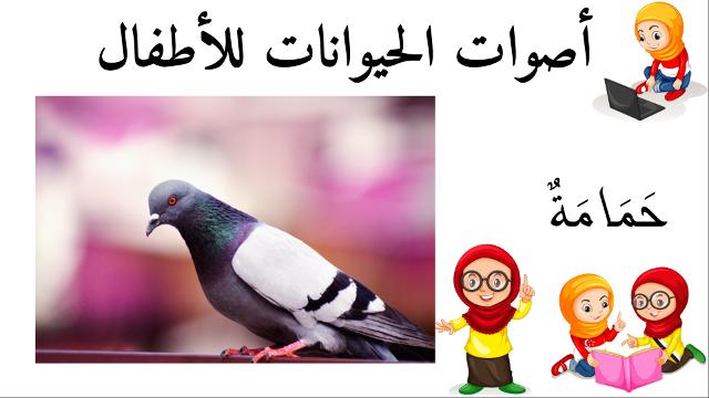 حمامة أسماء الحيوانات للأطفال وأصواتها Animals Parrot Bird