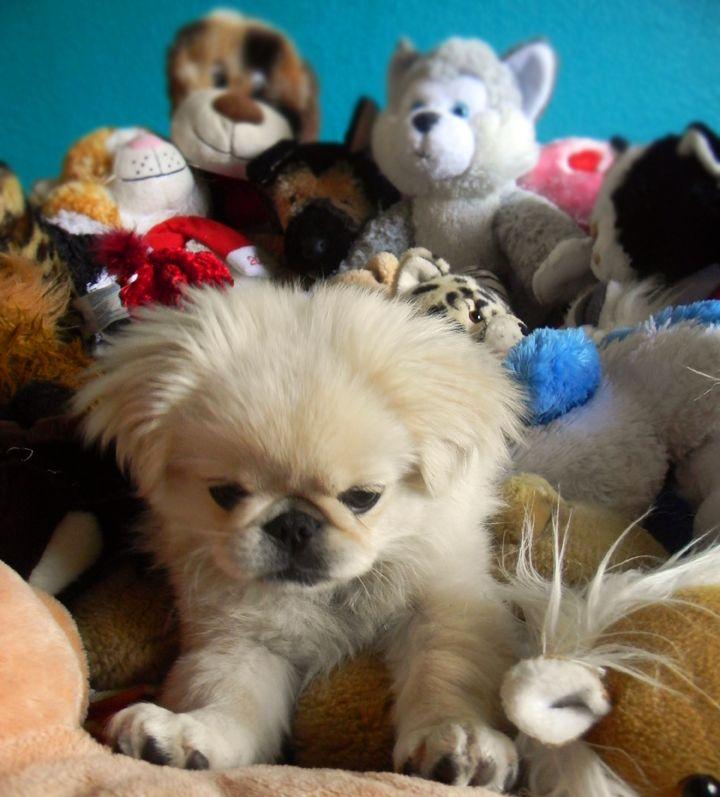 Puppy S Self Arranged Birthday Party Was Elaborate Puppies