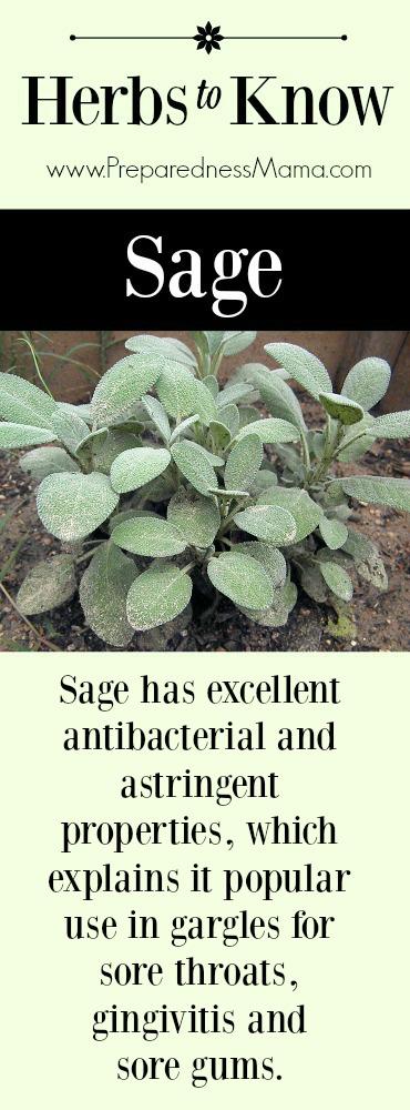 Herbs to Know: Sage | PreparednessMama