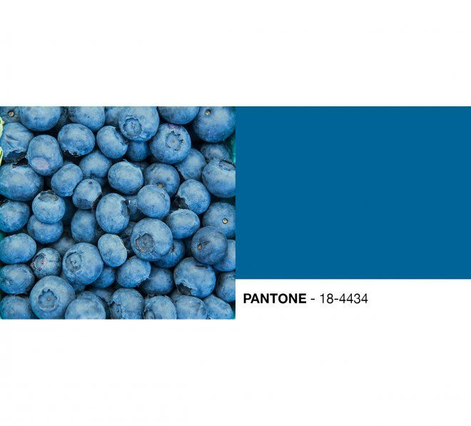 blueberries 20 pantone colors at the farmers market the