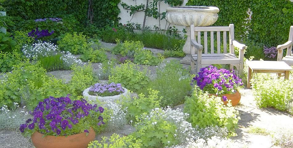 French Potager / Herb Garden in May. Left-Blooming Lady\'s Mantle ...