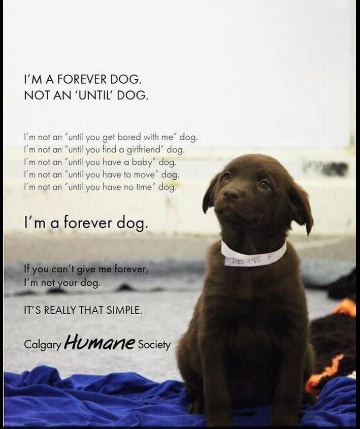 Forever Dog Dog Quotes Dogs Baby Dogs