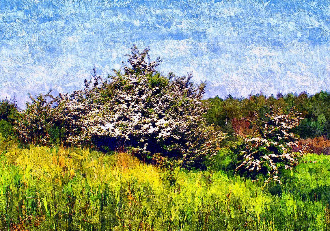 Hedeland: Hvidtjørn i blomst på Dopperne