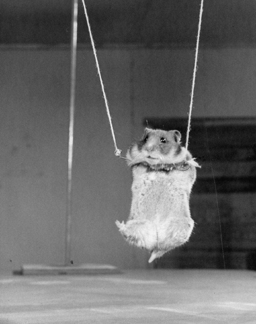 Hamster Vintage