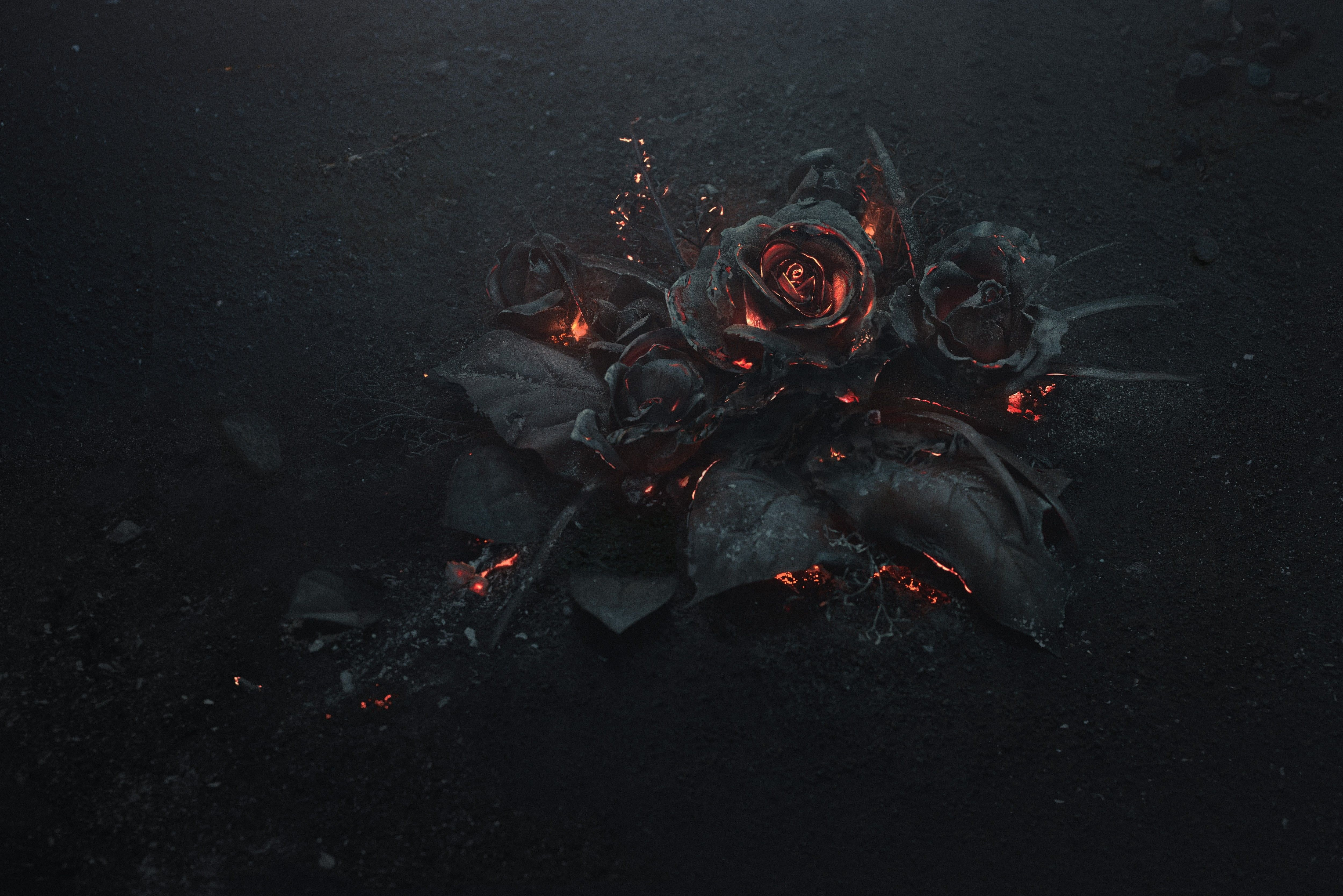 Wallpaper Black Rose Illustration Ash Burning Abstract Dark Flowers In 2020 Dark Wallpaper Rose Illustration Simple Wallpapers
