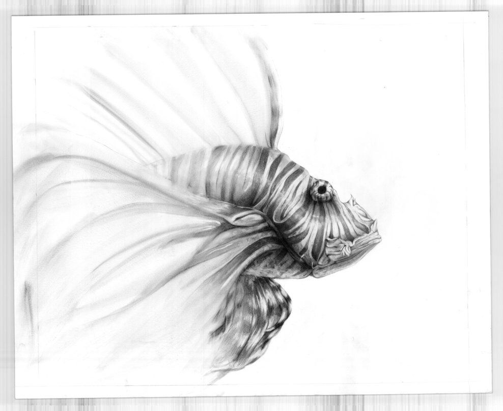 f9bf95ba0 Lionfish tattoo idea, majestic, mysterious, powerful but graceful ...