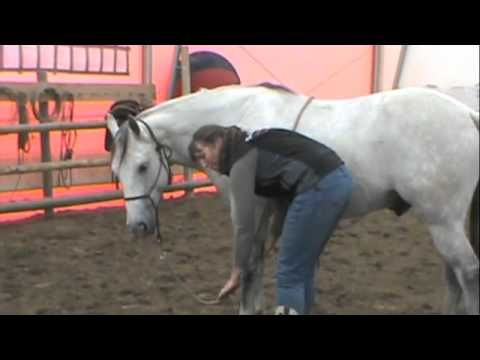 1e3399f82d How to teach a horse to lay down naturally (without ropes) ~ Tutorial! -  YouTube