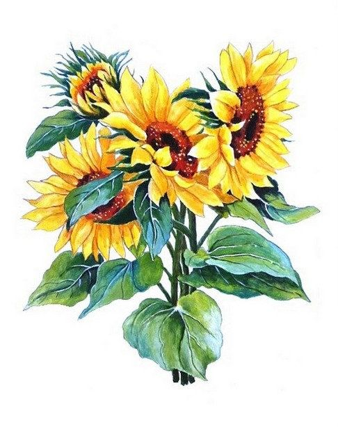 Sunflower Watercolor Painting Floral Art Print Watercolor