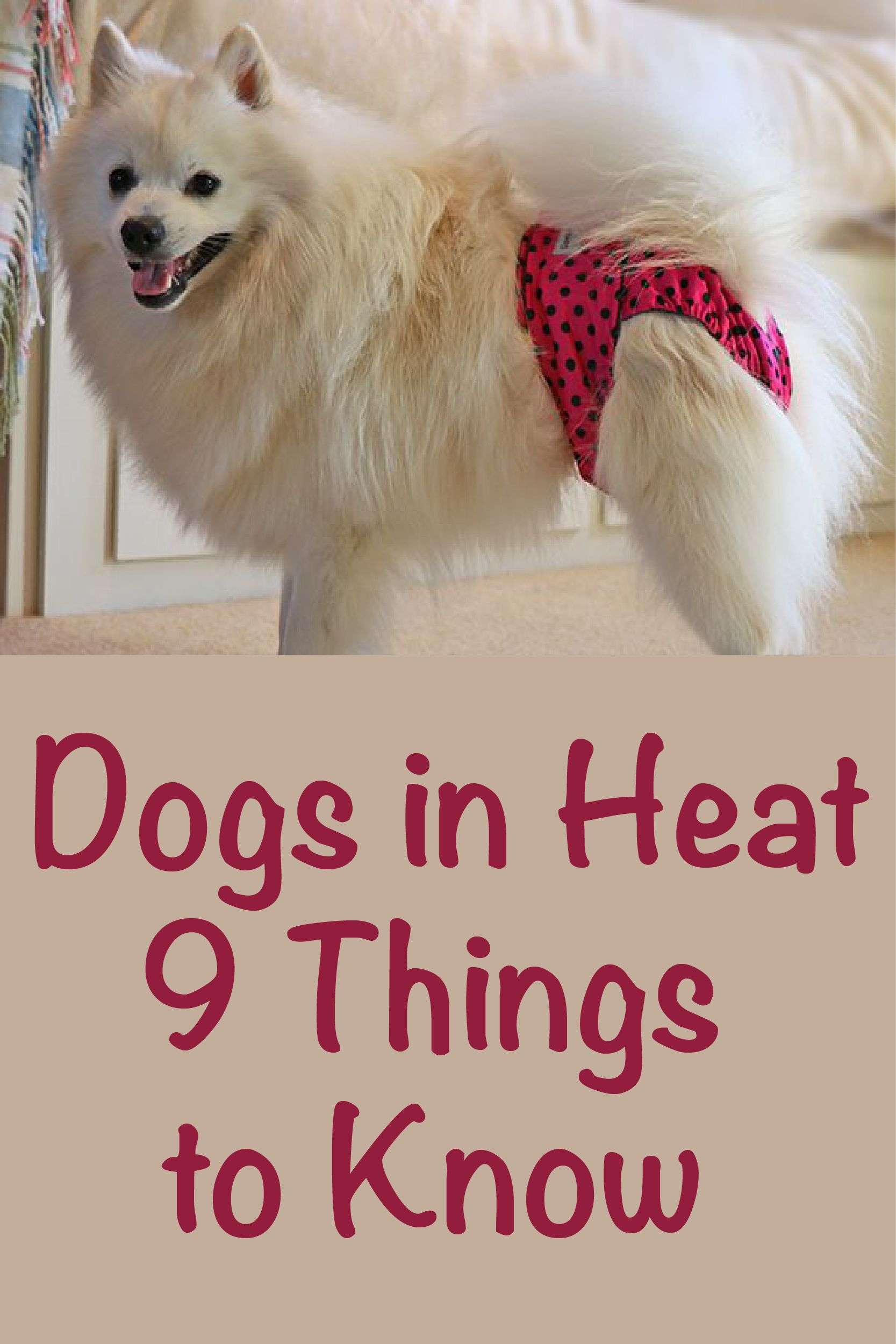 Dogs In Heat 9 Things To Know Dog In Heat Female Dog In Heat Dog Heat Cycle