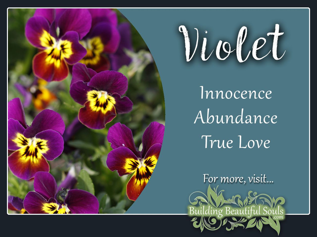 Violet Meaning Symbolism Flower Meanings Symbolism Flower Meanings Violet Flower Plant Symbolism