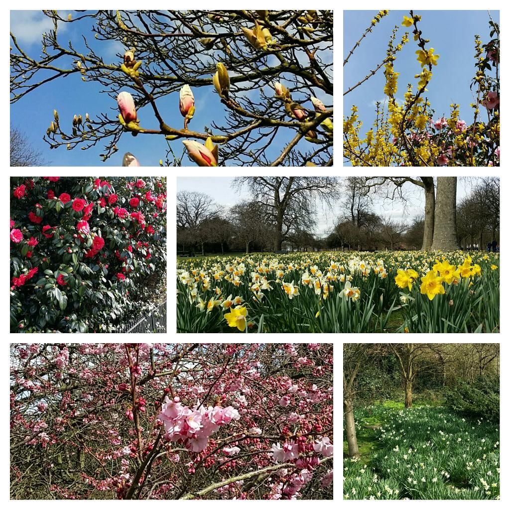 Spring in #GreenwichPark