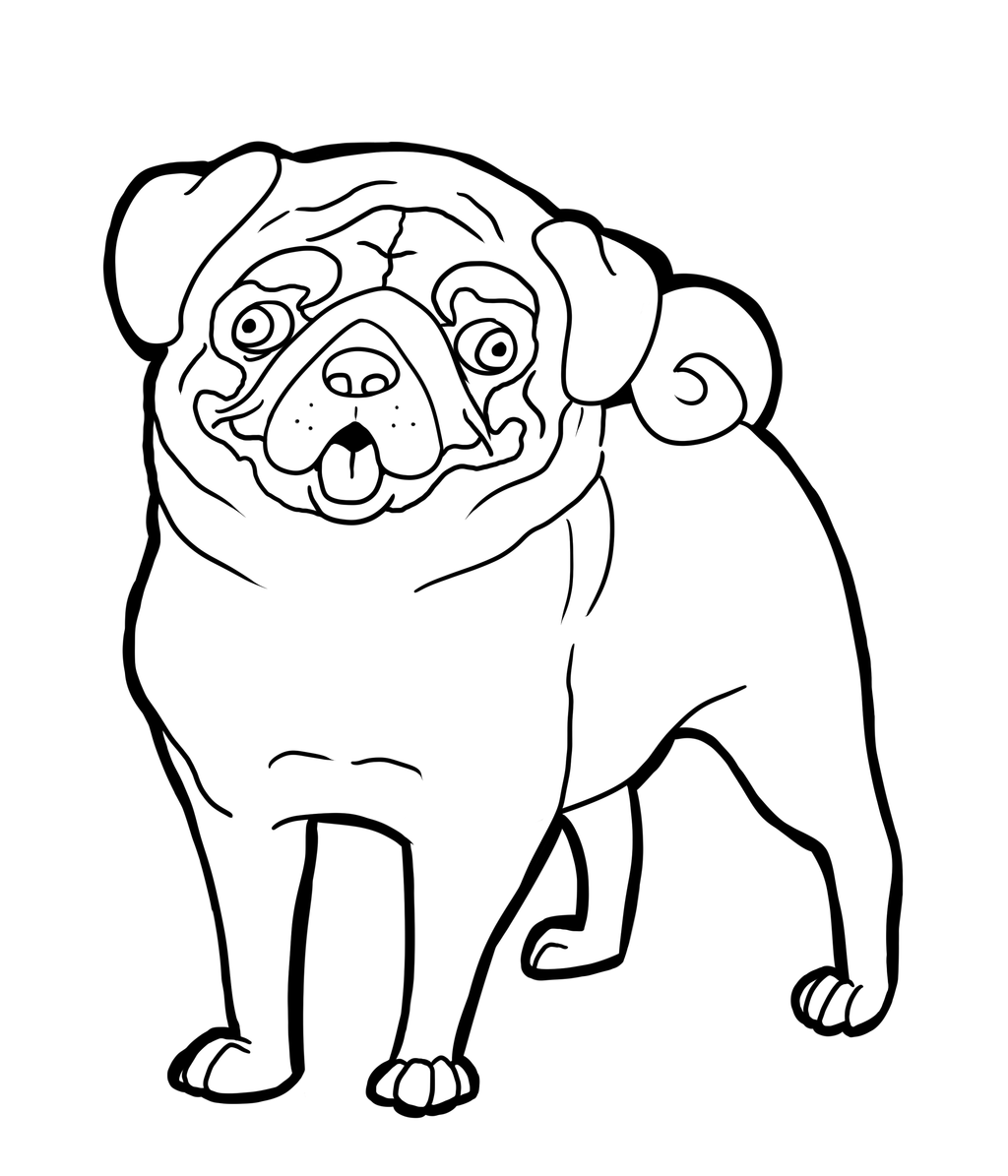 Pug coloring pages to download and print for free | Pug | Pinterest