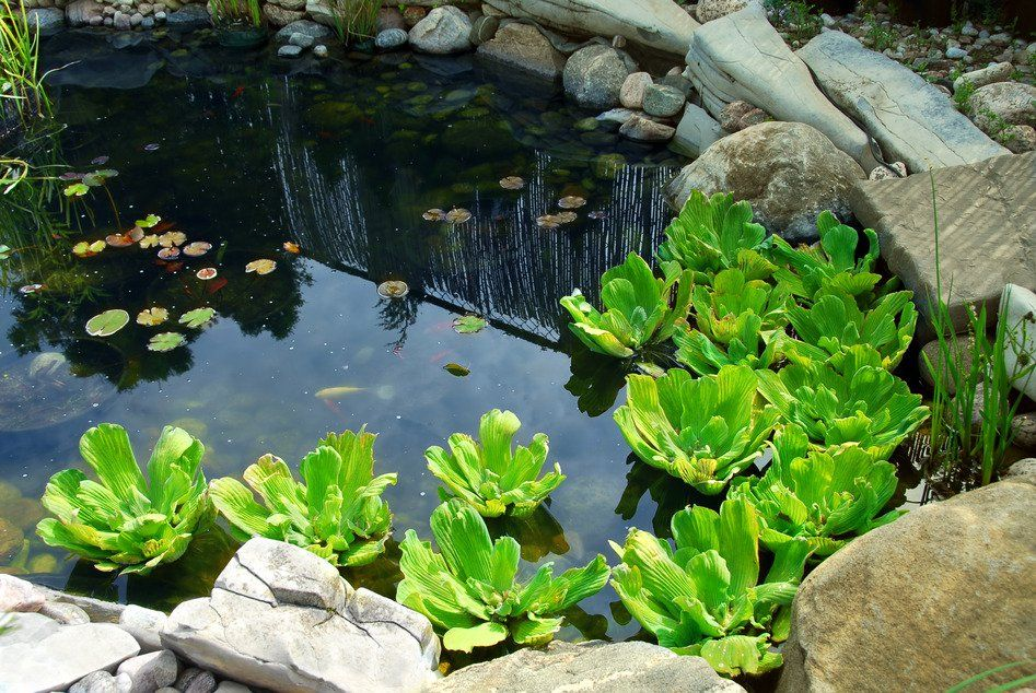 Having a pond into a permaculture plot can bring numerous benefits to the site. We have listed the factors to consider when designing a pond...