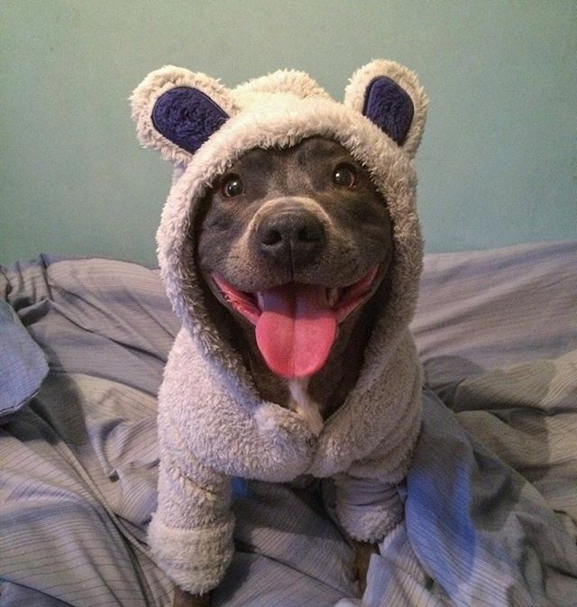 Onesie And Bedtime Need One For Ramona Pitties