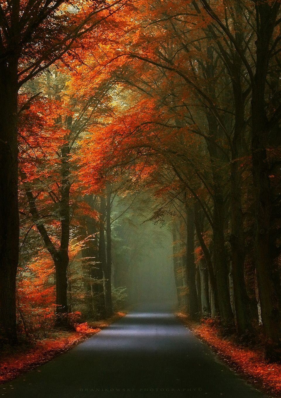 Visual Blogs Of Poetry Quotes And Art Welcome To My Darkness Autumn Scenery Landscape Pictures Nature Pictures Wallpaper autumn road rays alley trees