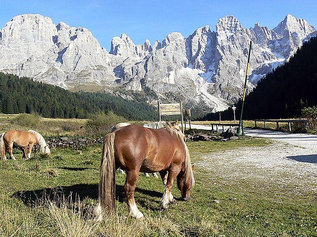 Paesaggi | Parco Paneveggio Pale di San Martino