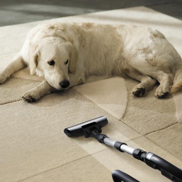 Se você não quer ficar com a casa cheia de pelos, confira esta lista de raças que soltam mais pelo! #cães #cachorros #animais #dogs #pets