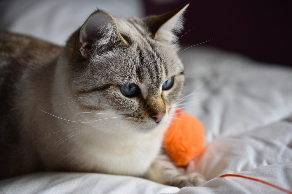 Cute Clothing Gifts And Accessories For Cat Lovers With Free Shipping Worldwide Pet Clinic Cats Pets