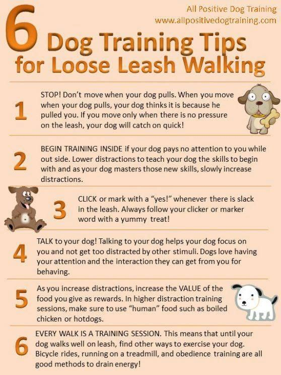 Tips On Loose Leash Training Loose Leash Walking Loose Leash