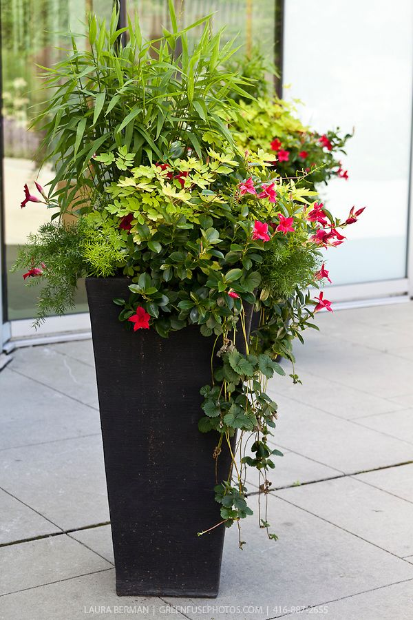Planting in large containers decorative planting in large containers greenfuse photos - Large container gardening ...