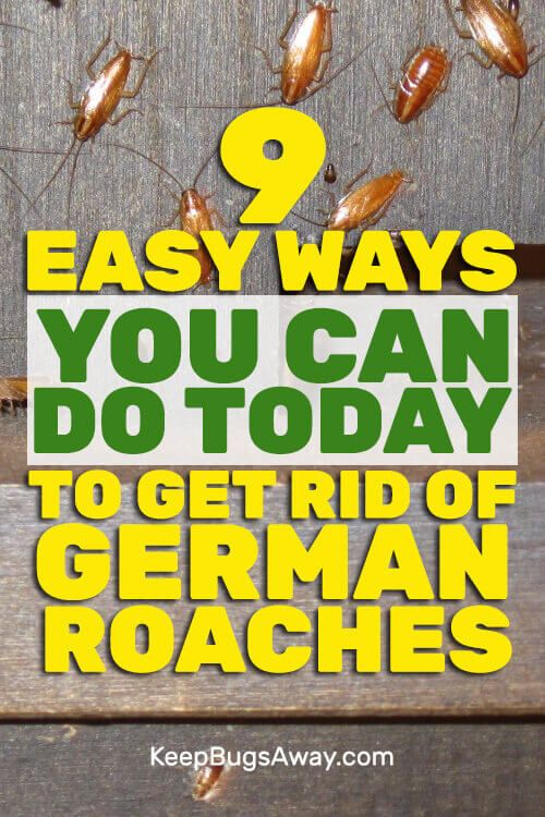 How To Get Rid Of German Roaches Without An Exterminator Pest