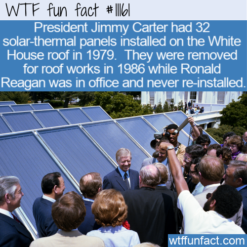 Wtf Fun Facts Funny Interesting And Weird Facts In 2020 Wtf Fun Facts Funny Wtf Fun Facts Fun Facts