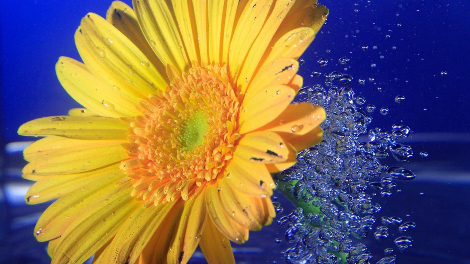 Google Image Result For Http Static Hothdwallpaper Net 517e1002926fb69765 Jpg Beautiful Flowers Images Flower Wallpaper Pink Flowers Wallpaper
