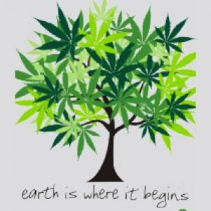 #marijuana grows on #trees www.gorilla-cannabis-seeds.co.uk